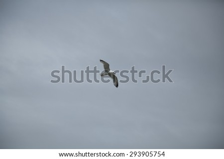 View of a seagull overhead in flight set against an overcast sky