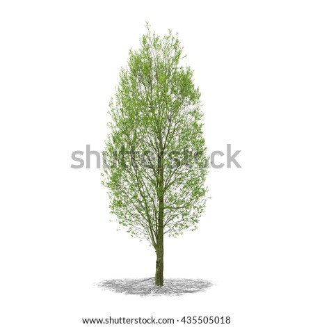 View of a Tree in high definition isolated on a white background