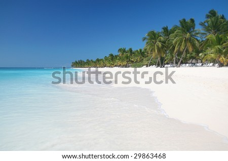 View of a tropical white sand beach with coconut palmtrees