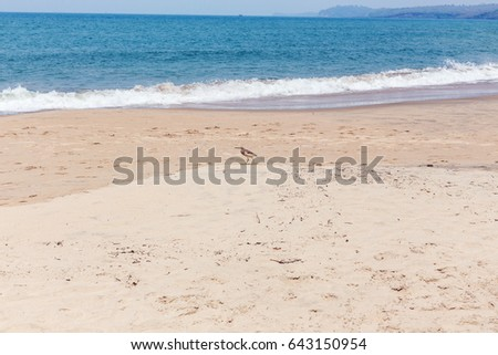 View of a turquise color sea with a tropical beach. seabirds in the background summer of summer Querim Beach, Goa, India, active holidays in paradise resorts.