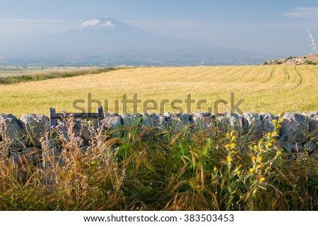 View of a typical dry stone wall a of a field of wheat in the hills near Ragusa, Sicily, and mount Etna