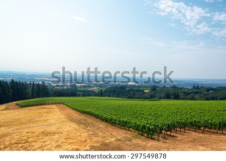View of a vineyard with the Willamette Valley below in Oregon wine country - stock photo