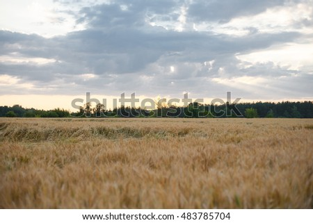 view of a wheat