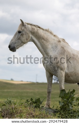 View of a white horse on top of a small hill in the countryside.