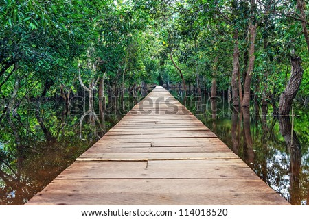 view of a wooden bridge in the Cambodian jungle