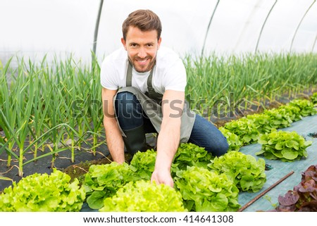 View of a Young attractive farmer checking quality of vegetables
