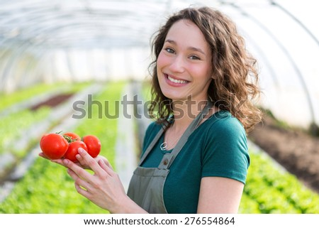View of a Young attractive farmer harvesting tomatoes - stock photo