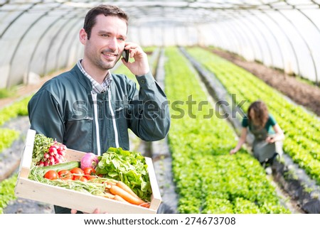 View of a Young attractive woman harvesting vegetable in a greenhouse - stock photo