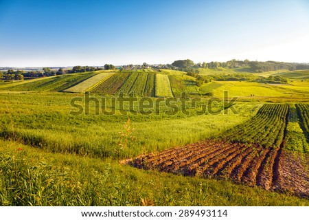 view of agricultural fields