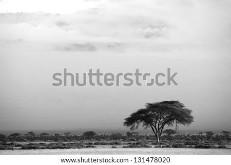 View of Amboseli National Park - stock photo