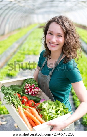 View of an Young attractive woman harvesting vegetable in a greenhouse - stock photo