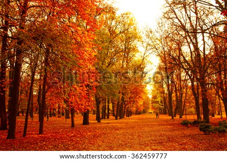View of autumn park with leaves on ground