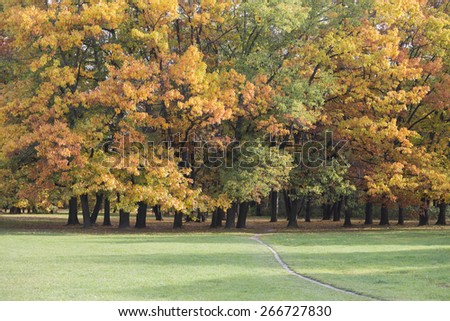 View of autumn trees in park
