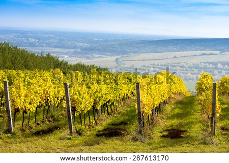 view of autumnal vineyards near Palava, Czech Republic - stock photo
