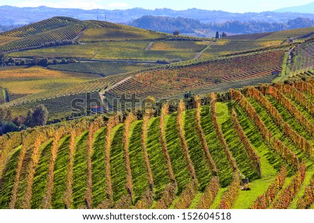View of autumnal vineyards on the hills of Langhe in Piedmont, Northern Italy. - stock photo