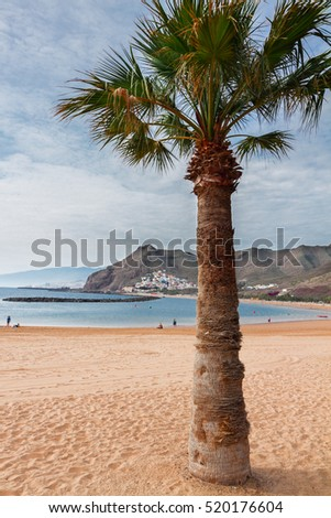 view of beach Las Teresitas with palm  at summer day, Tenerife island, Canarias Spain