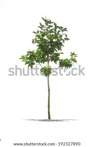 View of Beautiful green tree on a white background in high definition  - stock photo