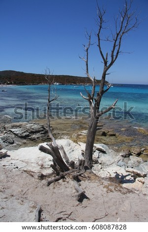 view of beautiful Lotu beach with crystal clear sea water near Saint Florent, Corsica island, France
