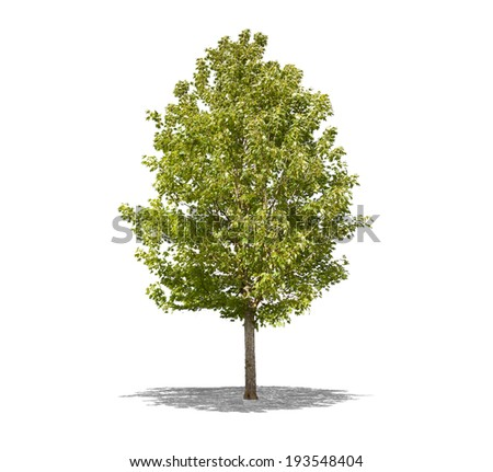 View of Beautifull green tree on a white background in high definition