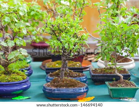View of Bonsai trees in the street market - stock photo