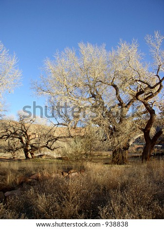view of brush and trees during fall in the desert southwest near a creek