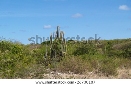 View of cactus and surrounding area around Devils Bridge at Indian Town Point National Park on Antigua Barbuda in the Caribbean Lesser Antilles West Indies.