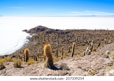 View of cactus covering Island Incahuasi with the Uyuni Salt Flats stretching out below in Bolivia - stock photo