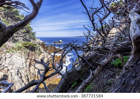 View of Carmel Bay, through dried and twisted Cypress tree branches, blue sea & sky, & unusual rock and geological formations, as seen from the North Shore Trail, at Point Lobos State Natural Reserve. - stock photo