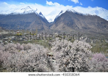 View of Cherry blossoms at Hunza valley along Karakorum range in north Pakistan - stock photo