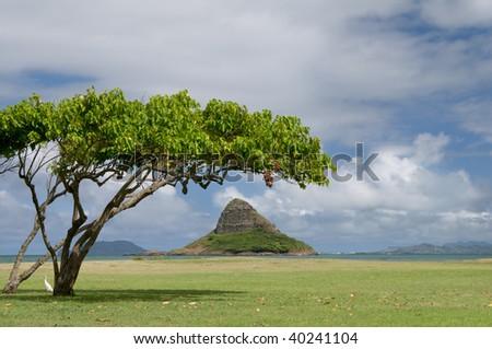 View of Chinaman's Hat Island or Mokolii Island framed by tree, from Kualoa Beach Park, Oahu, Hawaii - stock photo