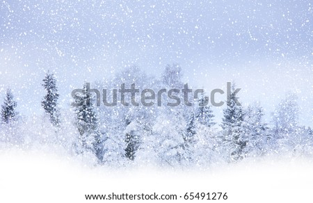 View of christmas trees through snow. Blue sky, snowflakes, trees, fog.