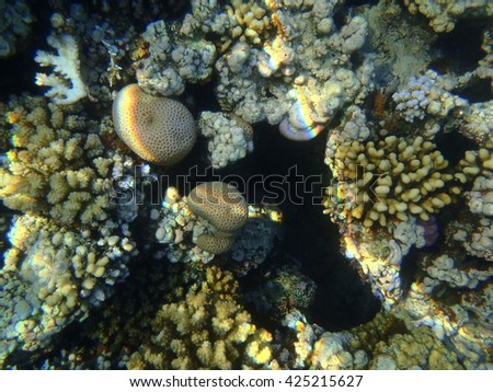 View of coral reef during a dive. Egypt. Hurghada.