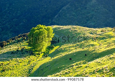 View of cow farm in New Zealand - stock photo