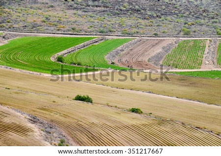 View of Cultivated Field in the Canary Islands