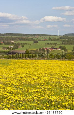 View of dandelion meadow and rural landscapes - stock photo