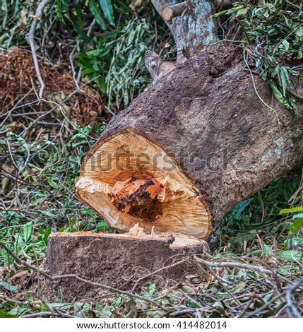 View of dead tree felling cut, broken down by country,Thailand - stock photo