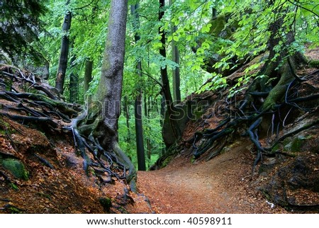 view of deciduous forest - stock photo