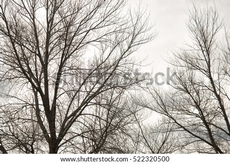 View of deciduous trees in winter without their leaves against a overcast cloudy sky