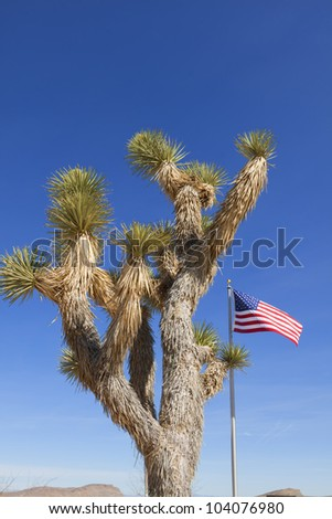 View of dry landscape and Joshua Trees with American Flag in the Mojave Desert. - stock photo