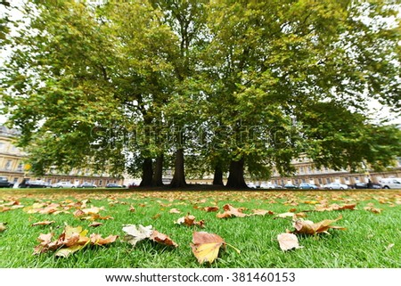 View of Fallen Leaves on a Park Lawn in the Landmark City of Bath in Somerset England