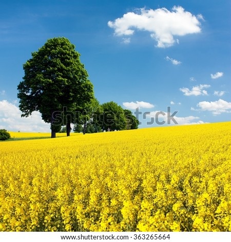 View of flowering field of rapeseed with trees and beautiful blue sky with cloud  - brassica napus - plant for green energy and oil industry - stock photo