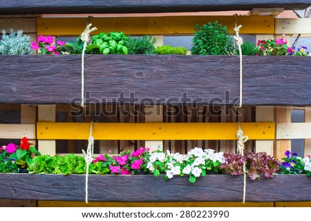 View of flowers pot in the house garden - stock photo