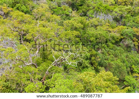 View of forest near Talay Nai (Green Lagoon) . Angthong national marine park, Suratthani, Thailand.