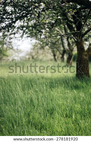 View of fruit trees in bloom - stock photo