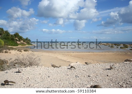 View of fuerteventura coast, with squirrells & pigeon ( Canary Islands, Spain ) - stock photo