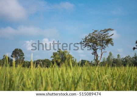 View of green fields mature with blue sky and focus tree background