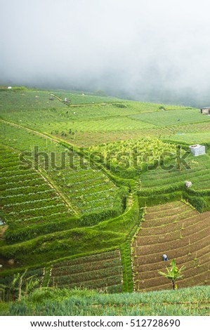 view of green landscape Traditional Onions farm at indonesia