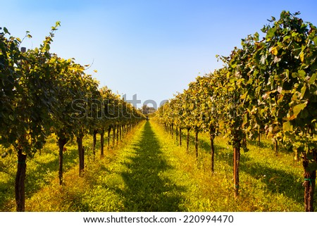 View of Italian vineyards in Friuli Venezia Giulia, Italy - stock photo