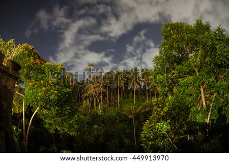 View of Jungle at Night with stars and clouds in the sky