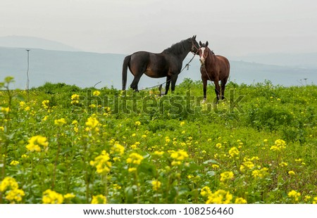 View of Landscape of Galilee, Horses, Israel
